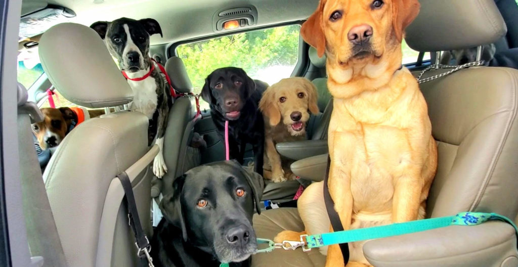 dogs on the way to school
