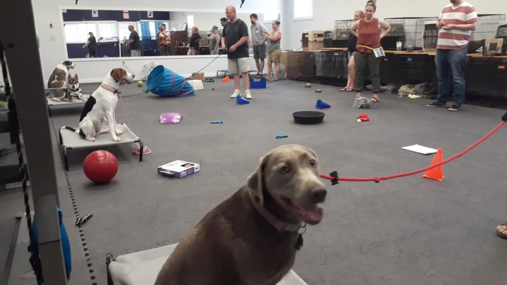 group dog class in session